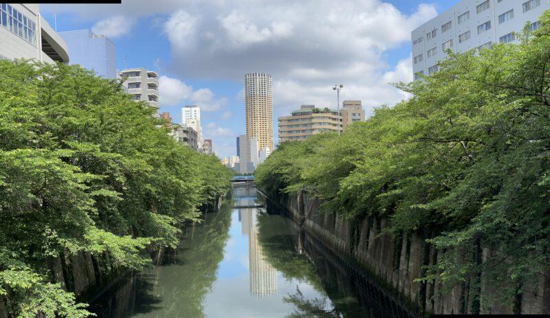 夏の目黒川